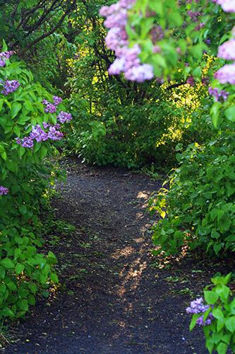 garden_064